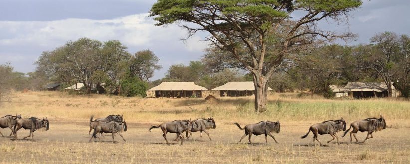 East Africa Year Round Migration Safari