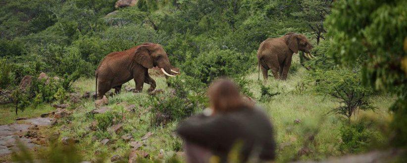 Family Kenyas Mara Laikipia
