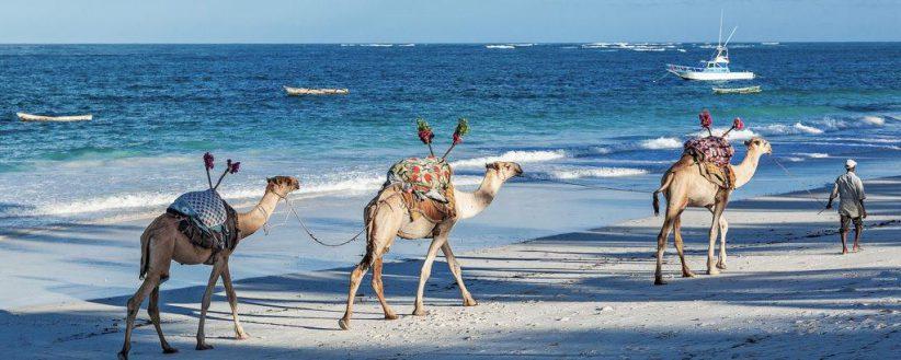 Luxury Mara Diani Beach Break