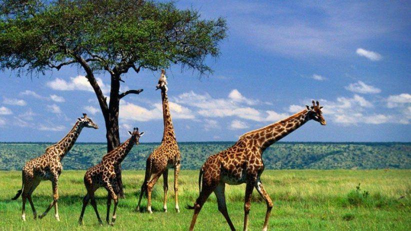 Tanzania Camping Safari 950x534
