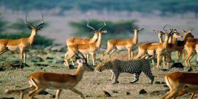 Tanzania Camping Safari 2 950x534