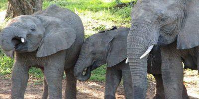 Animals Elephants 950x534