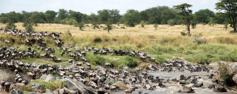 Kicheche Mara Camp 8965