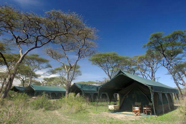 Kirurumu Ngorongoro Camp 1