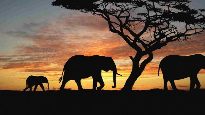 Tanzania Camping Safari 3 950x534