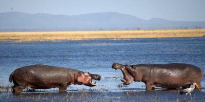 Tanzania Camping Safari 4 950x534